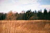 Spotmatic-Wheat